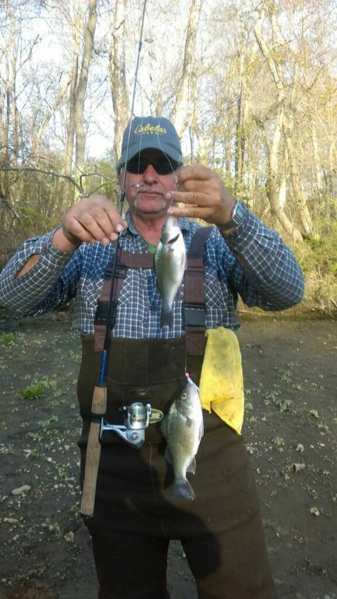 Sarge's Bait and Tackle Chesapeake Bay Fishing Report - Perch