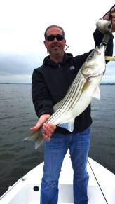 Sarges Bait and Tackle Chesapeake Bay Fishing Report - Stripers
