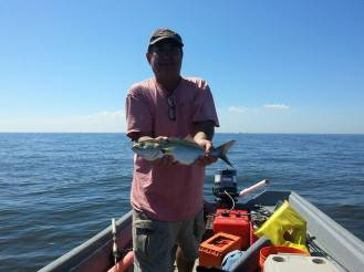 upper-bay-bluefish