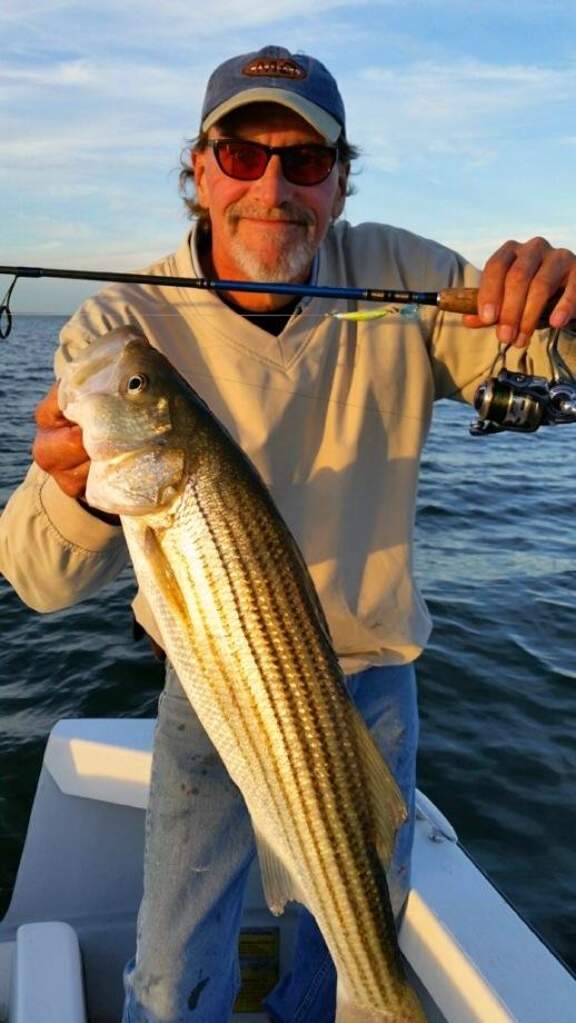 upper-bay-rockfish-1