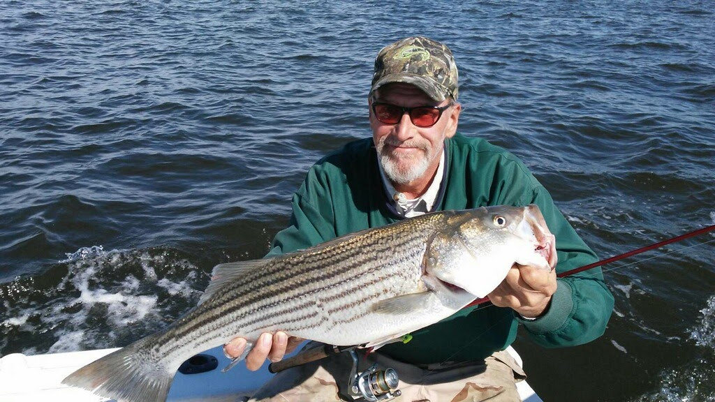 The yack report chasing stripers sarges bait and tackle for Middle chesapeake bay fishing report