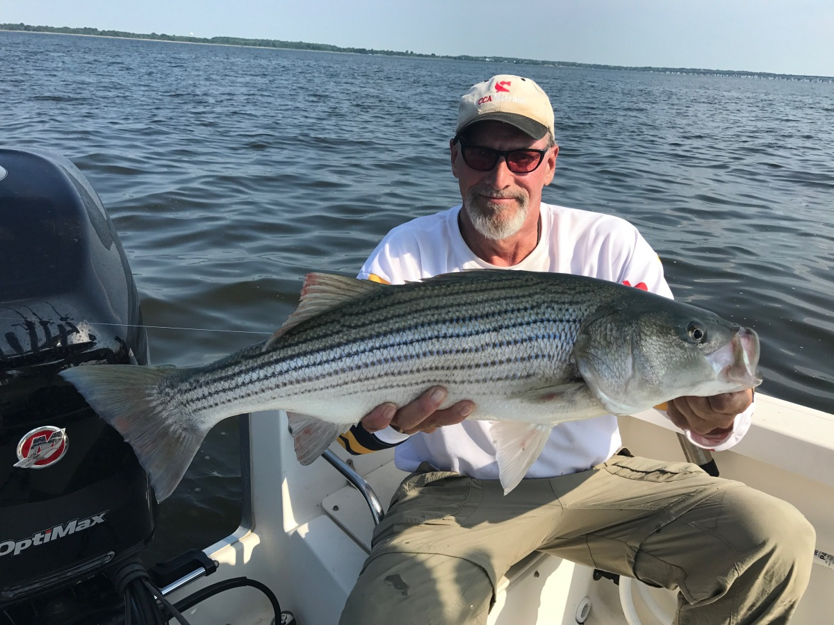 Yack s tackle tips hot jigs this week sarges bait and for Middle chesapeake bay fishing report