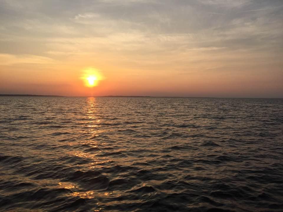 Mid Bay Rockfish 24