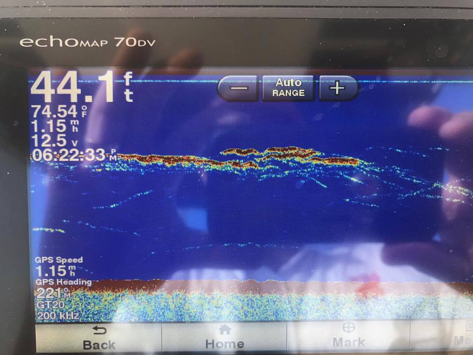 Mid Bay Rockfish24