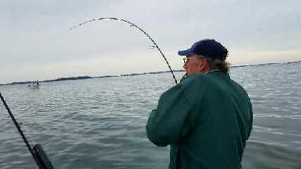 November Rockfish 10