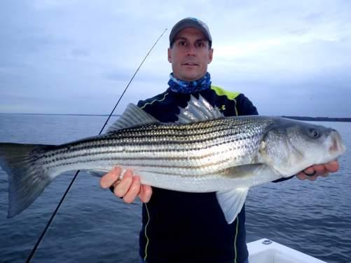 November Rockfish 22