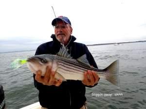 November Rockfish 24